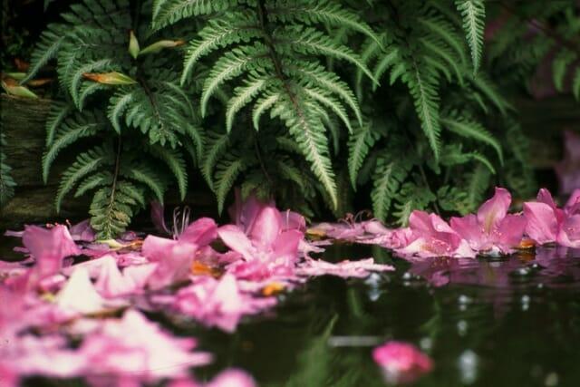 fallen-flowers-in-pool