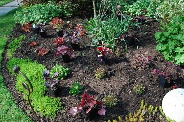 10 thoughts on successful underplanting a way to garden for Landscaping rocks under trees
