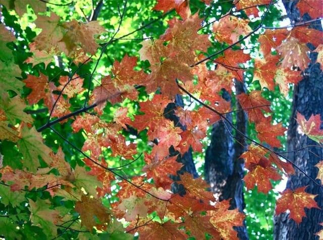 fall-leaves-start