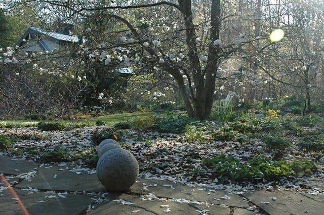 its-snowing-magnolias