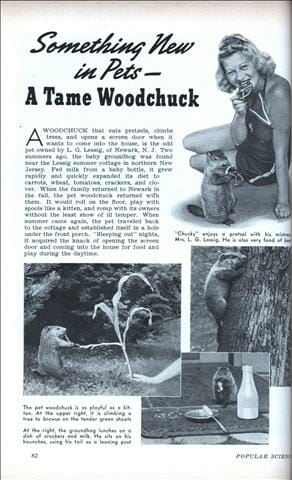 woodchuck-vintage