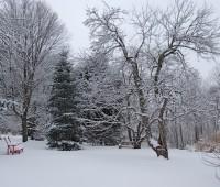 concolor in snow