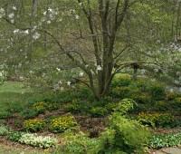 ephemerals-under-magnolia.jpg