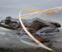 frog-on-ice.jpg