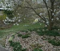 magnolia-is-beautiful-even-fallen.jpg
