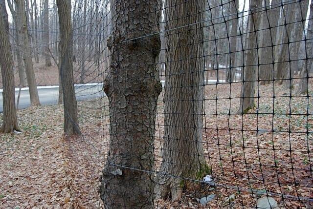 net-on-trees