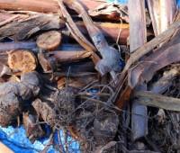 canna-debris-2.jpg