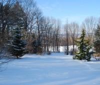 far-shrubbery-in-winter.jpg