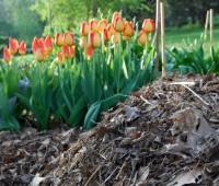 12 top composting faq's