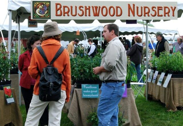 brushwood2