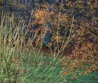 cornus-sericea-silver-and-gold-twig-dogwood.jpg