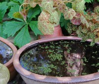 may-30-houseplants-out.jpg