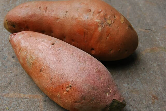 home care website design inspiration with Let There Be Sweet Potatoes How To Plant Them on Vector 11062425 additionally Index further Simple Hand Tattoo Design For Women furthermore Brushed Aluminum as well Horse 12103044.
