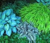 underplanting-by-walkway.jpg