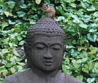 chippie-on-buddha