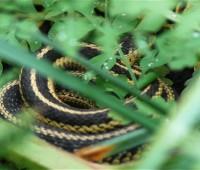 coiled-snake-3