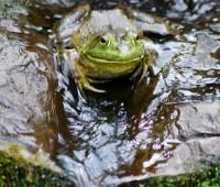 frog-freshens-up