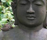 frog-on-buddha-2