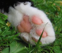 pink-paws