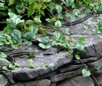 snakes-on-wall
