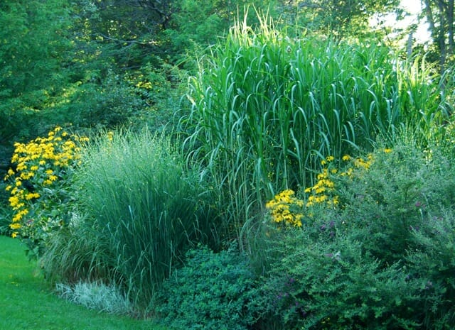 Ornamental Grasses Upstate Ny : Hey big boys easy tall perennials a way to garden