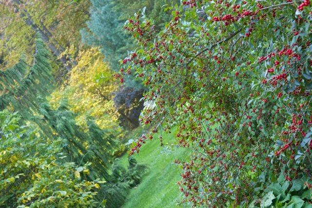 Fall in the far shrub borders