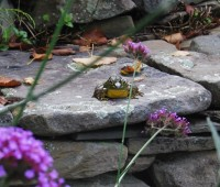 frog-on-wall