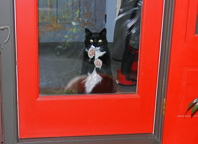 let me out jack