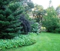 shrub-borders
