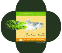 spotted_trout_lettuce