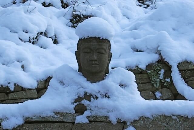buddha muffin