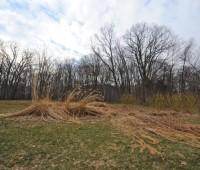 cut-down-grasses