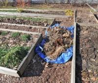 veg-garden-cleanup-spring