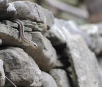 first-snake