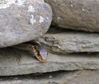 first-snake-2