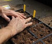 seed-starting-10