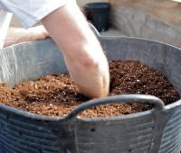 seed-starting-1