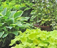 pots-of-houseplants-and-perennials