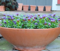 viola-bowl