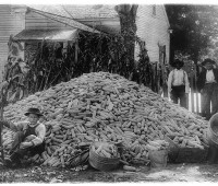 corn 1909-1930