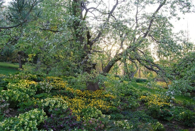 April 29 Margaret Roach garden