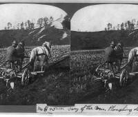 plowing-corn-field
