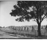 stracked-corn-in-field