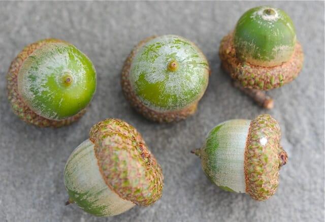 acorns 2010 2