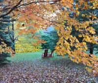 fallen-maple-leaves