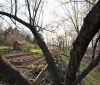 april-5-old-veggie-beds