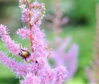 few-beetles