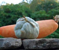 rethinking the vegetable garden and one seed-shopping 'rule' of mine