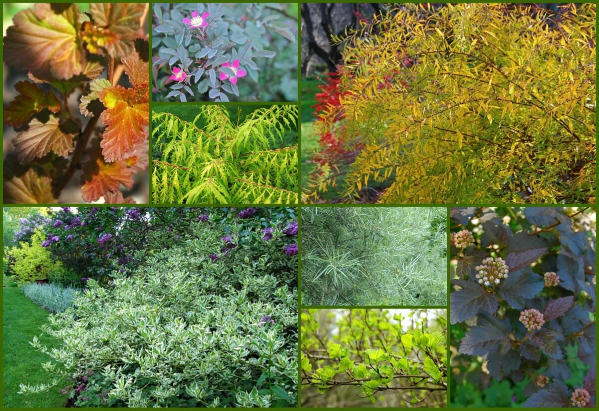 colorful shrubs collage