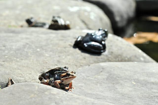 wood frog porn 3